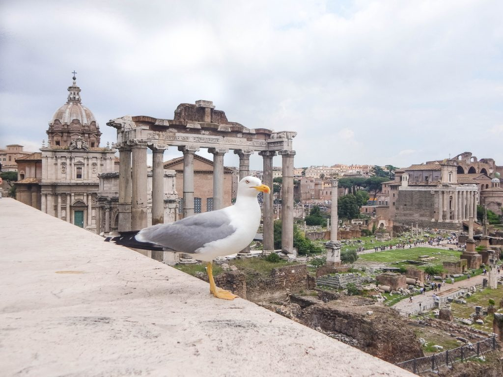 Roman ruins in Rome Roman Forum - Colosseum, the Roman Forum and the Palatine Hills are definitely the most famous ancient Roman ruins in Rome, however, there are many more Roman buildings that adorn the city and its outskirts, but here in this post